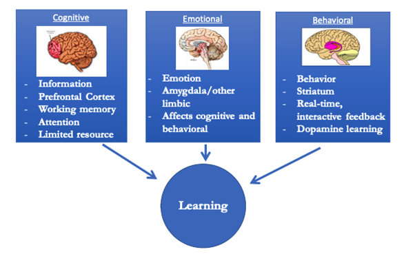 According to Maddox, the brain relies on three different learning systems: cognitive, behavioral and emotional. Each system operates in a different part of the brain, as seen in the diagram below: