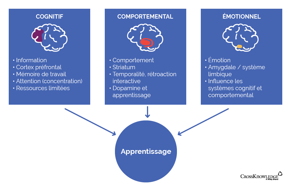 neurosciences de l'apprentissage